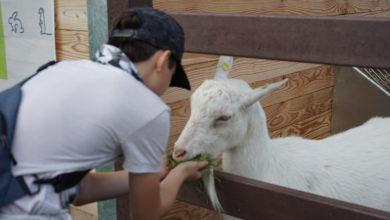 Zusätzliche Unterstützung des Landes für die nordrhein-westfälischen Zoos und Tiergärten